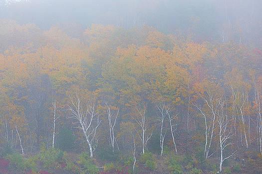 Foggy Acadia Woodlands by Dennis Kowalewski