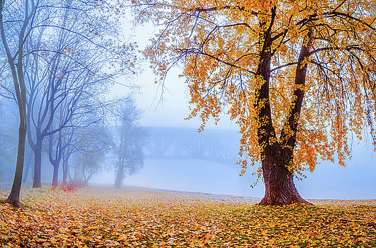 Foggy autumn morning on Vistula by Dmytro Korol