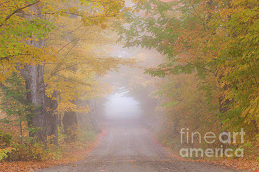 Foggy Autumn Road by Alan L Graham
