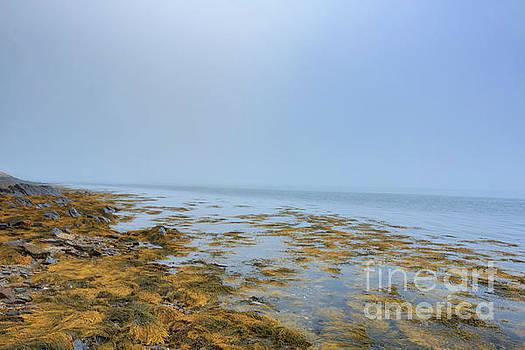Foggy Coast of Maine by Elizabeth Dow