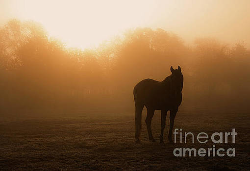 Foggy Dawn by Sari ONeal
