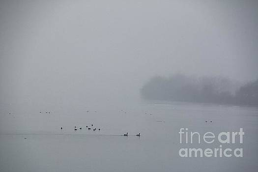 Foggy Day on the Upper Niagara River by Tony Lee