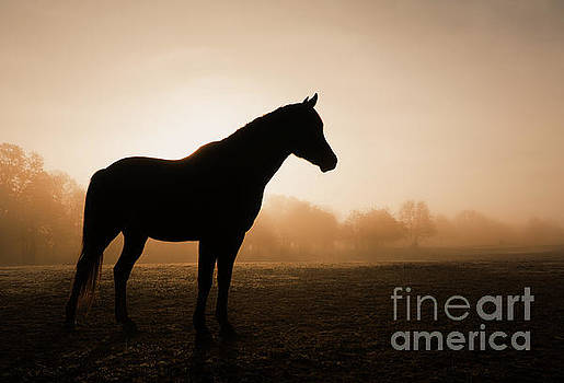 Foggy Daybreak by Sari ONeal