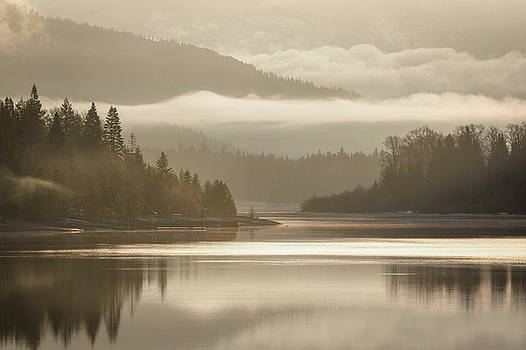 Foggy Dreamscape - Golden Glow by Joy McAdams