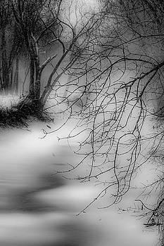 Foggy Feeder by Kendall McKernon