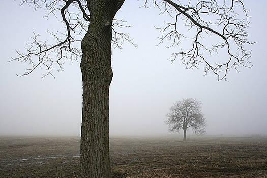 Kathy Stanczak - Foggy Field