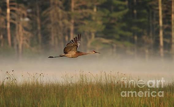 Foggy Flight by Teresa McGill