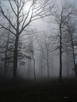 Alana  Schmitt - Foggy Forest 3