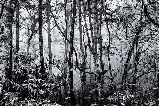 Lisa Lemmons-Powers - Foggy Forest in Fall BW