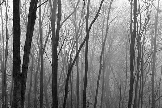 Foggy Forest by Kathy Stanczak