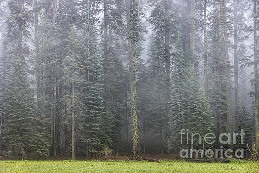 Foggy Forest by Peggy Hughes