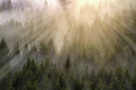 Foggy forest by William Freebilly photography