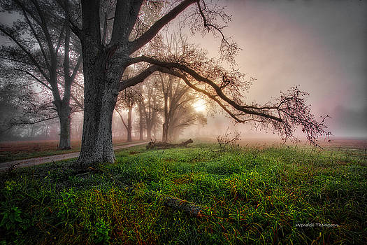 Foggy Kentucky Sunrise by Wendell Thompson