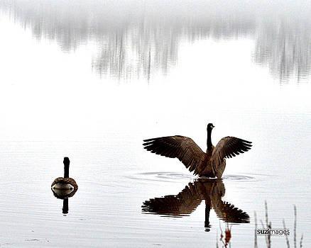 Foggy Lake Winona by Susie Loechler