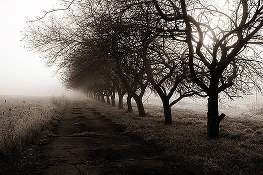 Foggy Lane by Dick Pratt