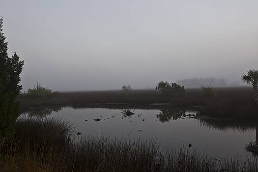 Foggy Marsh  by Regina Williams