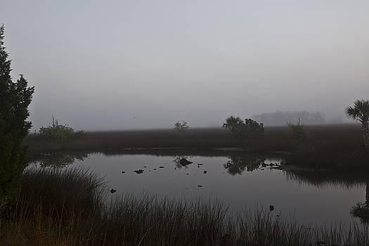 Regina Williams - Foggy Marsh