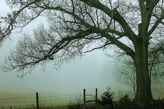 Foggy Morn by Keith Bowen