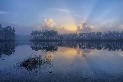 Foggy Morning at Long Pine Key by Claudia Domenig