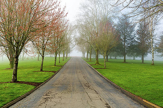 Foggy Morning at the Park by David Gn