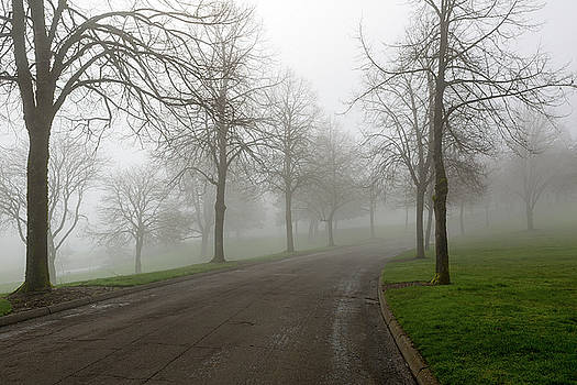 Foggy Morning at the Park Winding Path by David Gn