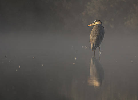 Foggy morning by David March
