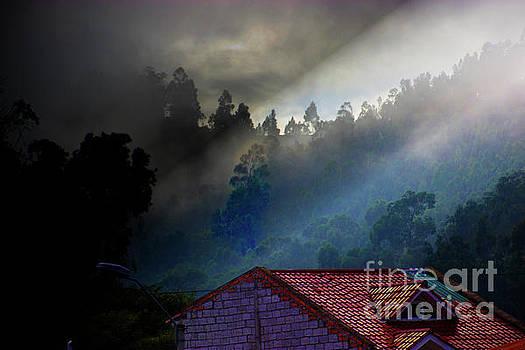 Foggy Morning In The Bosque de Monay by Al Bourassa