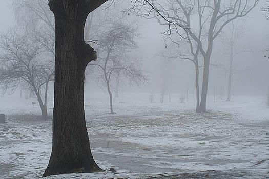 Rich Sirko - Foggy Morning in The Park