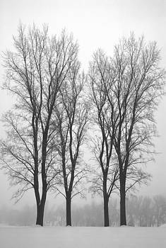 Steve Ohlsen - Foggy Morning Landscape 20