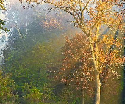 Foggy Morning by Lynn A Marie