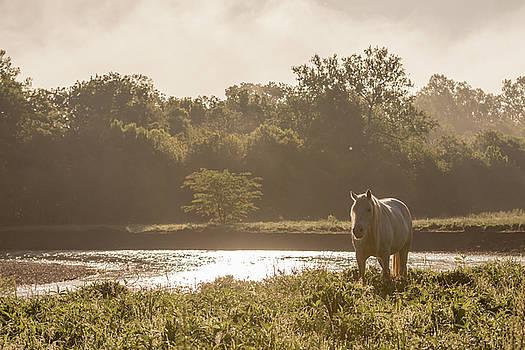 Foggy Morning Mist by Sandy Brooks