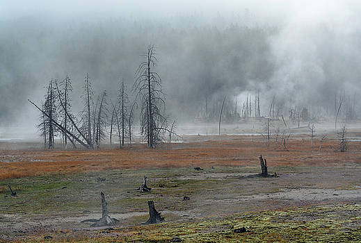 Foggy Morning on Firehole Lake Drive by Bruce Gourley