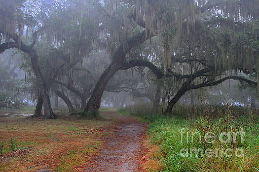 Foggy morning on the trail by Myrna Bradshaw