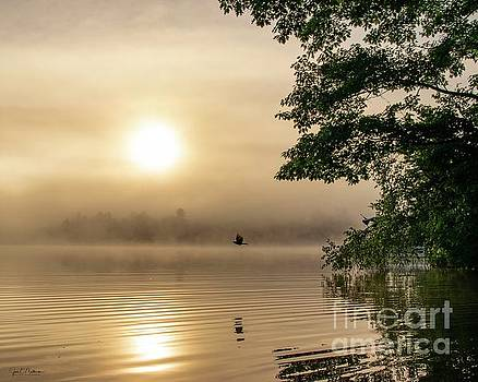 Foggy Morning on Woodbury Pond by Jan Mulherin