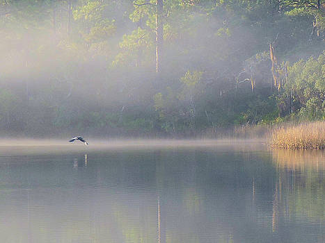 Foggy Morning by Robbie L Rogers