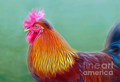 Foggy Morning Rooster by Marion Johnson