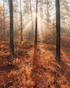 Foggy morning sun light forest by Juhani Viitanen