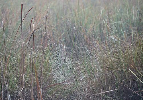 Bill Chambers - Foggy Morning Web in the Marsh