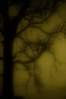 Foggy nights by Trisha Scrivner