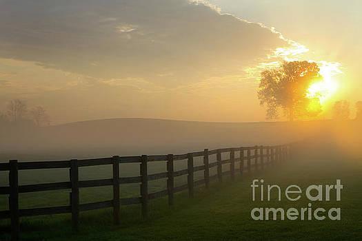 Foggy Pasture Sunrise by Steven Frame