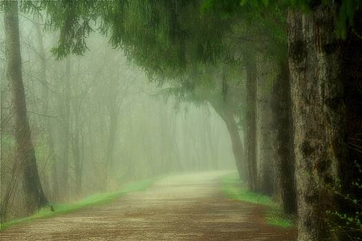 Foggy Path by Rod Flauhaus