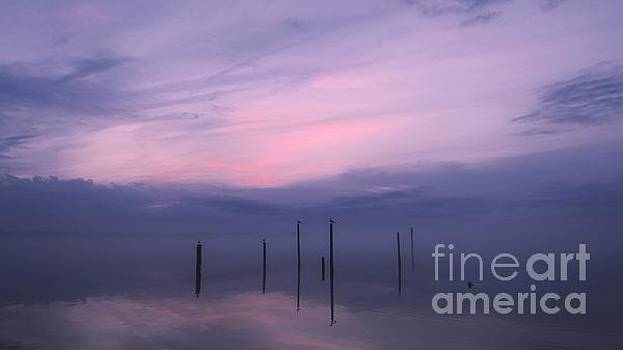 Foggy Purple Haze Sunset by Benanne Stiens
