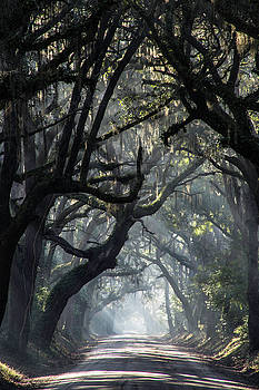 Foggy Rays by Bonnie Davidson