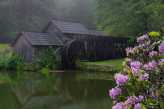 Foggy Reflections by Steve Hammer