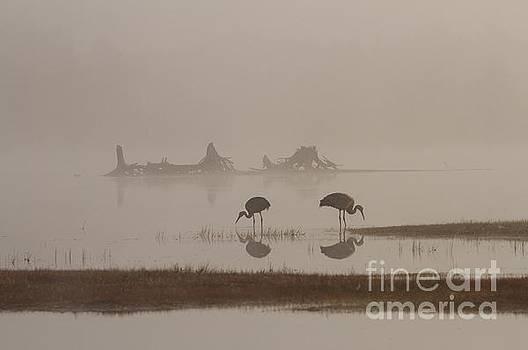 Foggy Seney Sunrise Reflections by Teresa McGill