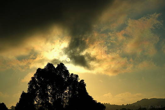 Joyce Dickens - Foggy Sunrise In El Sobrante