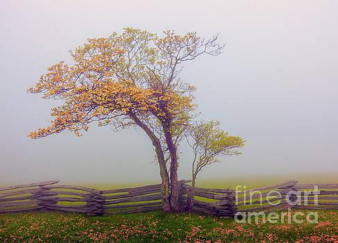 Dan Carmichael - Foggy Tree and Fence in the Blue Ridge