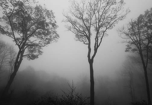 Foggy Trees by Alexa Gurney