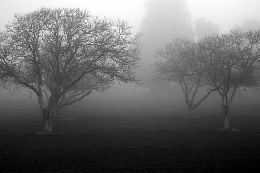 Foggy Trees by Balanced Art