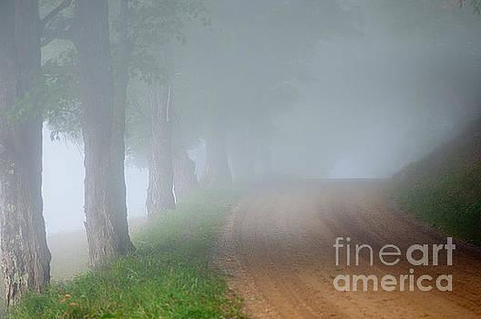 Foggy Way by Sandra Silva